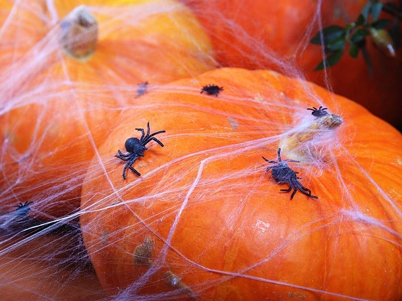 Hämähäkinseitti